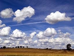 VitusVet on the cloud