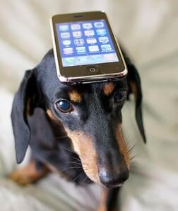 dog-with-iphone-by-nao-cha.jpg-7971200-pixels