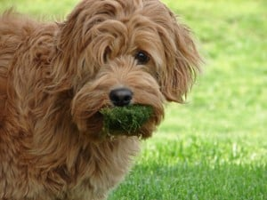 doggrass.jpg