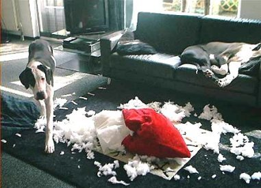 how-to-keep-dog-from-chewing-furniture.jpg