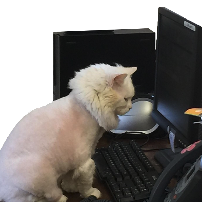 shaved_cat_on_computer.png