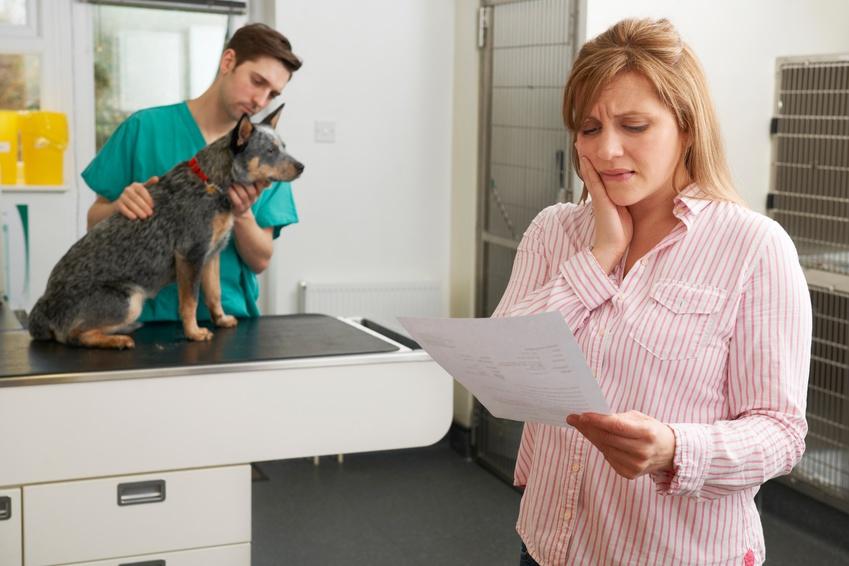 unhappy_veterinary_client.jpg